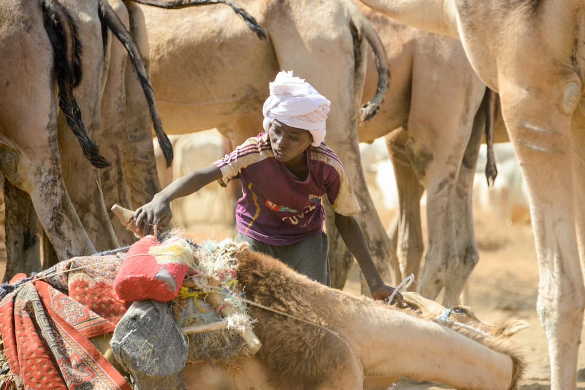 Nomaden Tsjaad kameel
