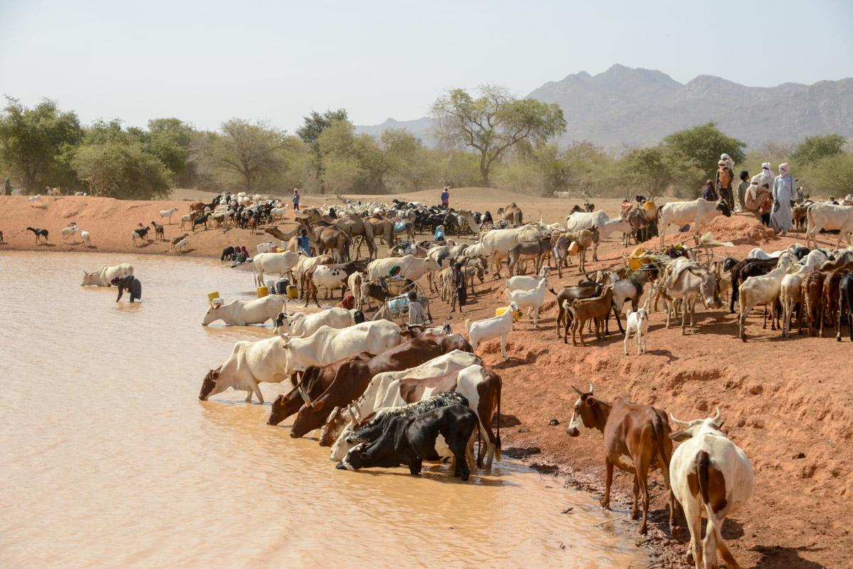 Nomaden Tsjaad waterbron