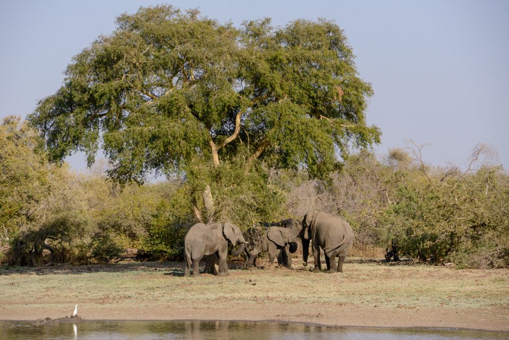 Zakouma Tsjaad olifanten