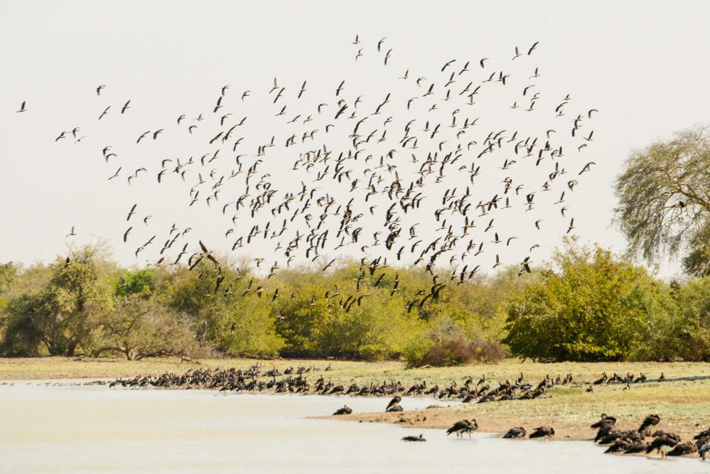 Zakouma Tsjaad vogels