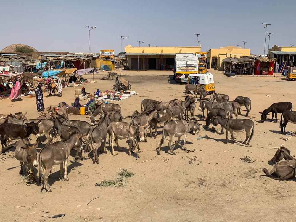 Biltine Tsjaad ezels