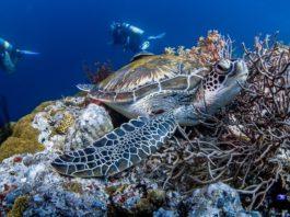 beste duikplekken in Afrika