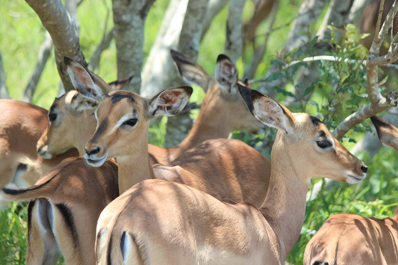 Mwabvi Wildlife Reserve Malawi