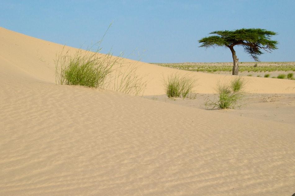Sahara Mauritanie