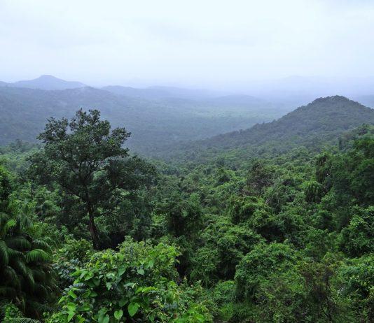 Nyungwe Forest National Park Rwanda