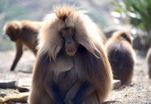 Simien Mountains National Park Ethiopië
