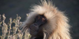 Bale Mountains National Park Ethiopie
