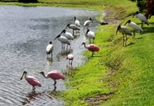 Isangano National Park Zambia