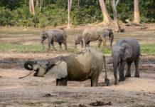 Ivindo National Park Gabon-1