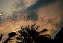 Kasanka national park vleermuizen Zambia
