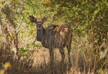 Lengwe National Park Malawi