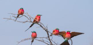 Luambe National Park Zambia