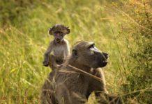 Lusenga Plains National Park Zambia
