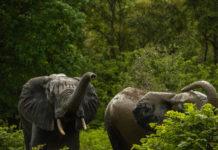 Minkébé National Park Gabon