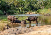 Mweru Wantipa National Park Zambia