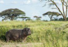 Nsumbu National Park Zambia nijlpaard