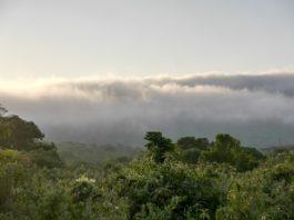 Udzungwa het Galapagos eiland van Tanzania.jpg
