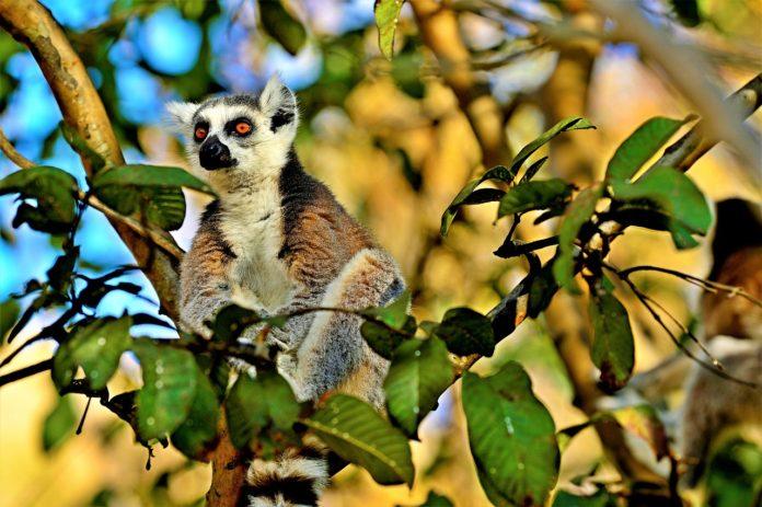 Andohahela National Park Madagaskar