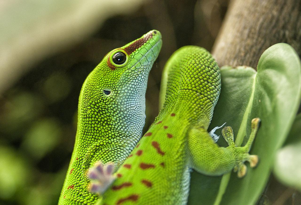Andohahela National Park reptielen