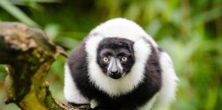 Ankarafantsika National Park Madagaskar