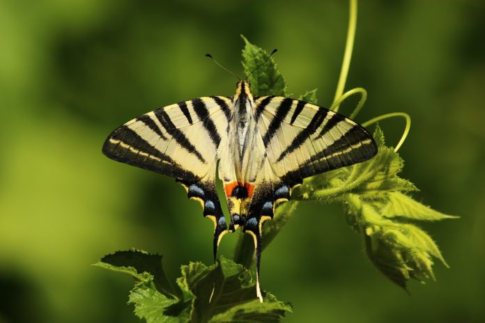 Bobiri Forest and Butterfly Sanctuary Ghana