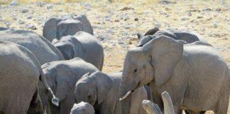 Khaudum National Park Namibie