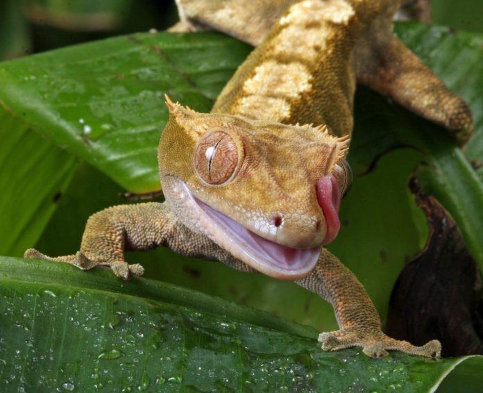 Midongy du Sud National Park Madagascar