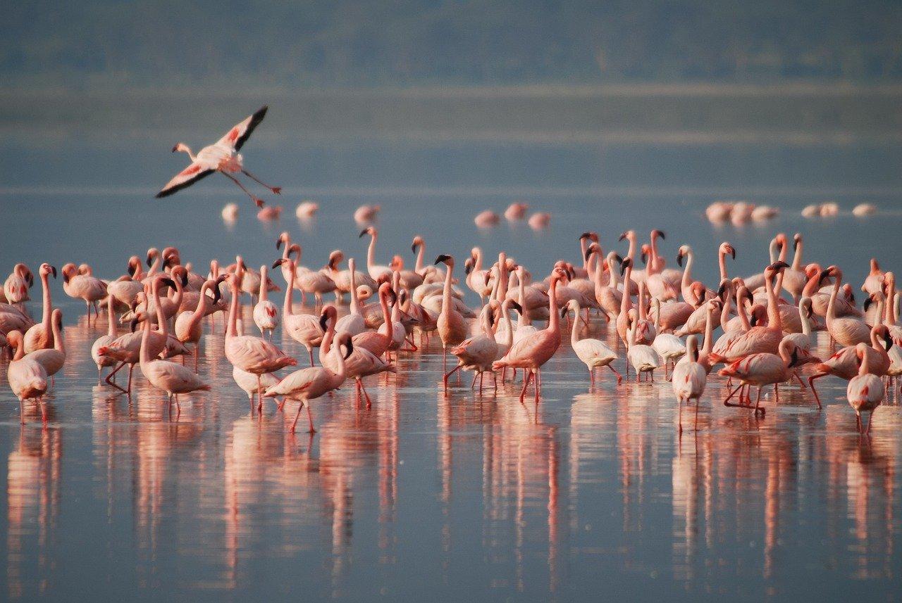 Tsimanampetsotsa National Park flamingo