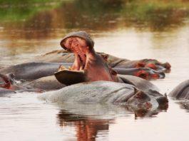 Wechiau Hippo Sanctuary Ghana