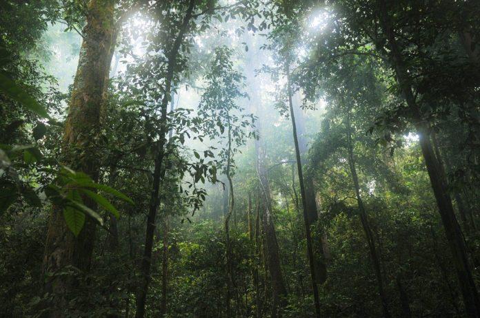 Diécké Forest Reserve guinee