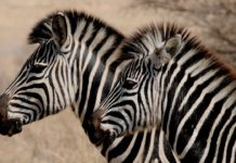Gaborone Game Reserve Botswana