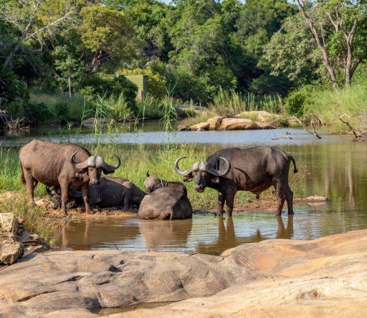 Gambella National Park