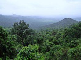 Korup National Park Kameroen