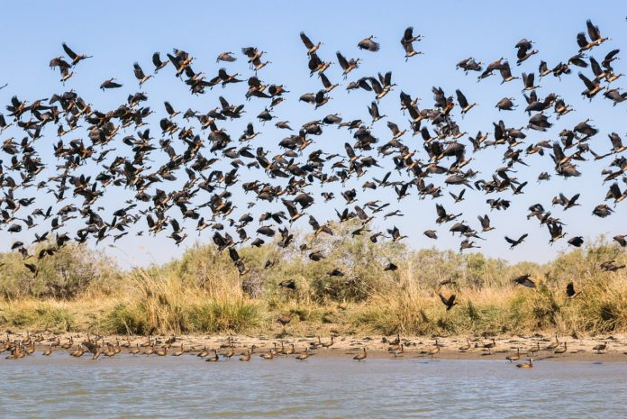 Ndiael Faunal Reserve Senegal