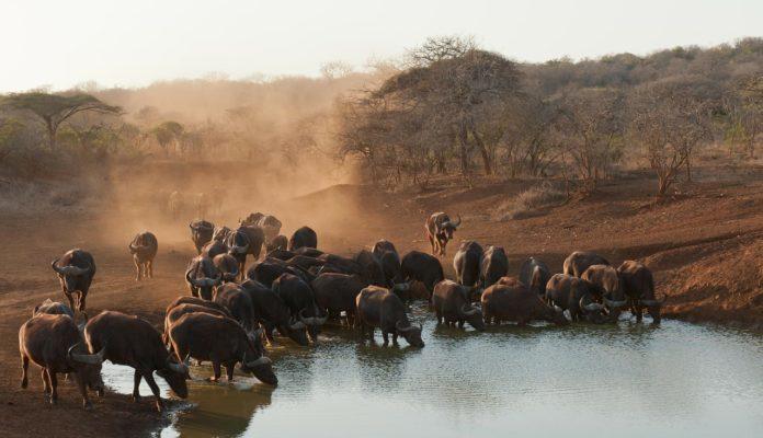 Dinder National Park Soedan