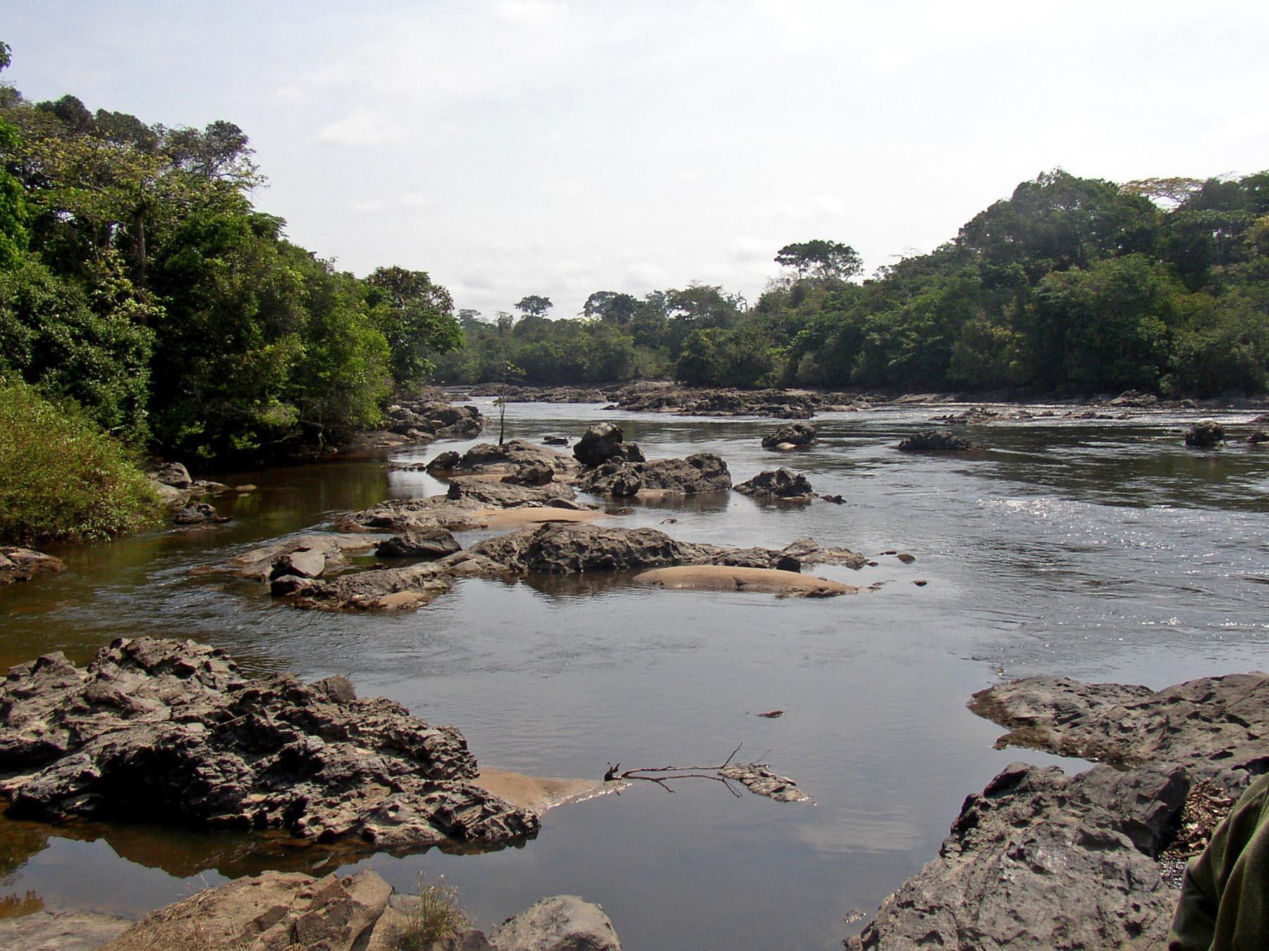 Epulu Okapi Wildlife Reserve Congo