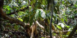 Maiko National Park Congo