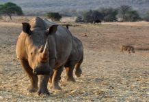 Mangetti National Park Namibie