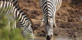 Ugalla River Game Reserve Tanzania