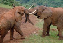 Aberdare National Park Kenia