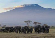 Amboseli National Park Kenia