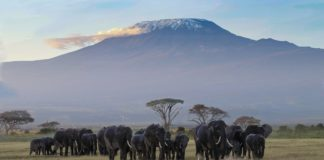 Amboseli National Park Kenia