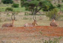 Arawale National Reserve Kenia