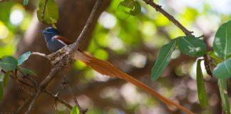 Kakamega Forest Reserve Kenia