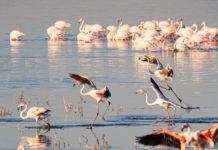 Lake Turkana Kenia de Jade zee
