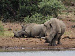 Lewa Wildlife Conservancy