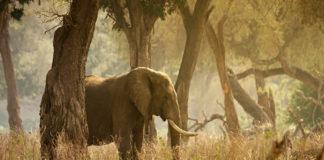 Marsabit National Park Kenia