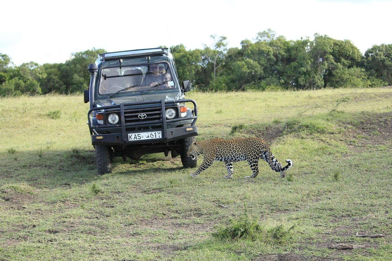 Masai Mara National Reserve safari