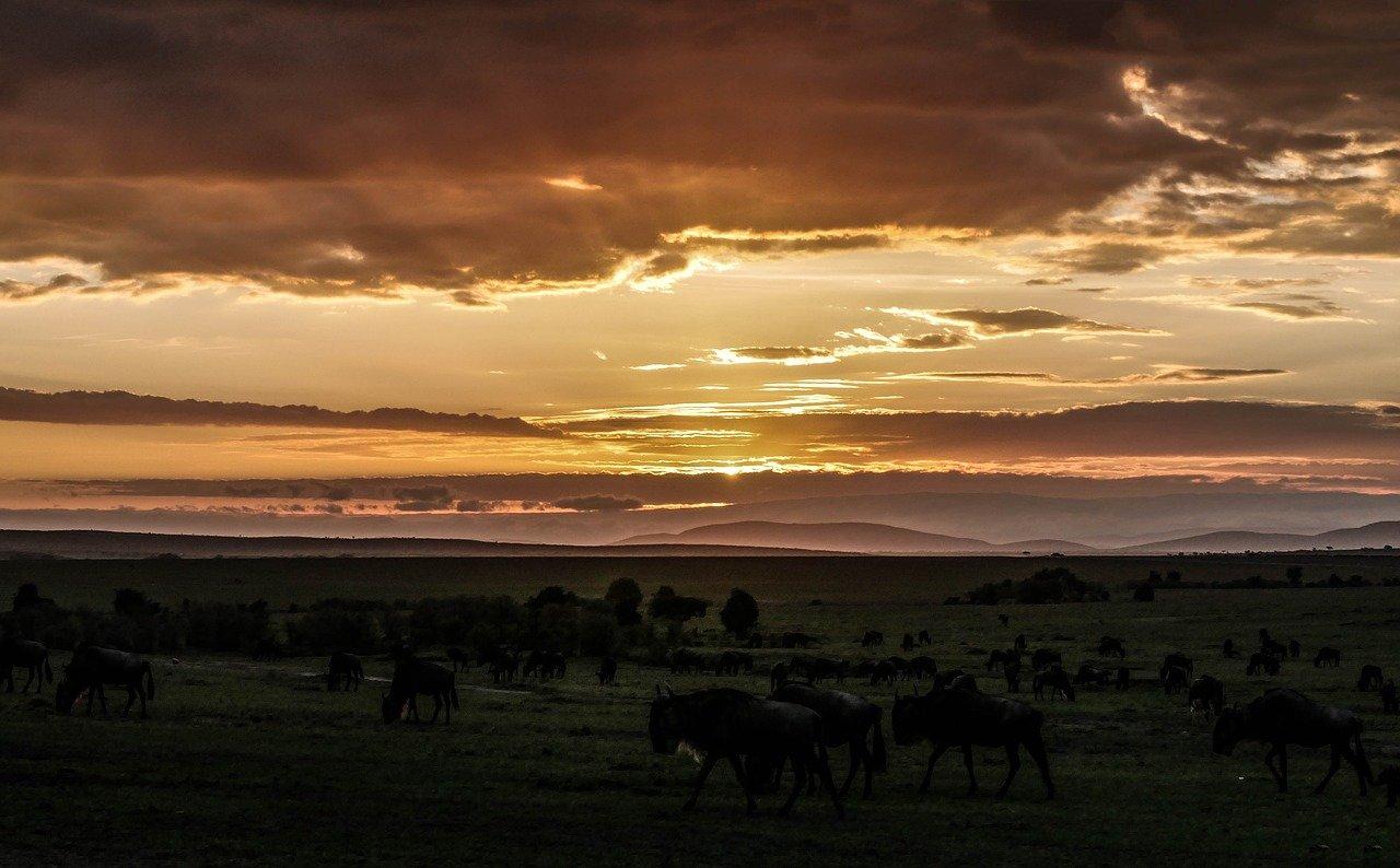 Masai Mara National Reserve zonsopkomst