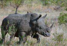 Meru national park Kenia